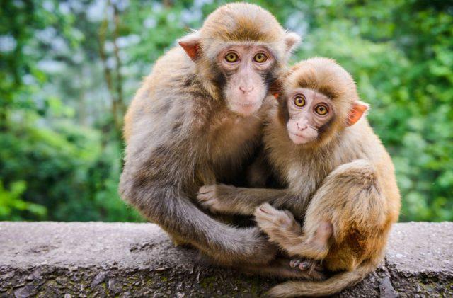 Nằm mơ thấy khỉ là điềm báo gì? đánh con gì dễ a?