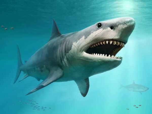 Nằm mơ thấy cá mập chơi xổ số con gì may mắn