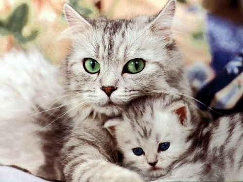 Năm mơ thấy mèo là điềm báo gì? Hên hay xui ?